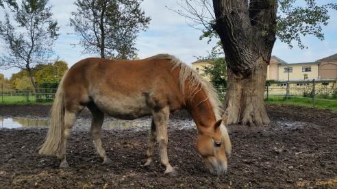 horses-1022821_1920